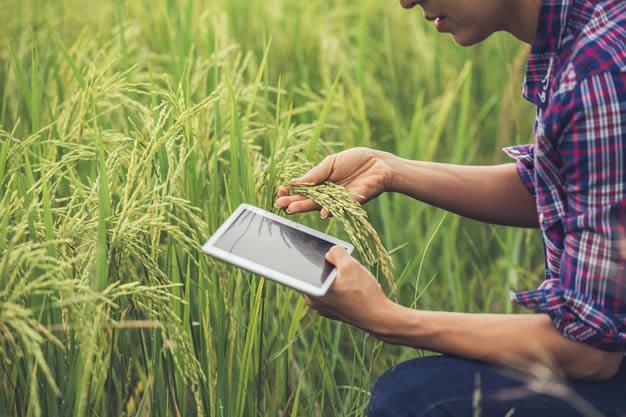 ERP para el sector agroindustrial